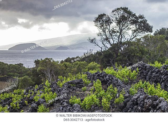 Portugal, Azores, Pico Island, Canto, volcanic rock vineyards