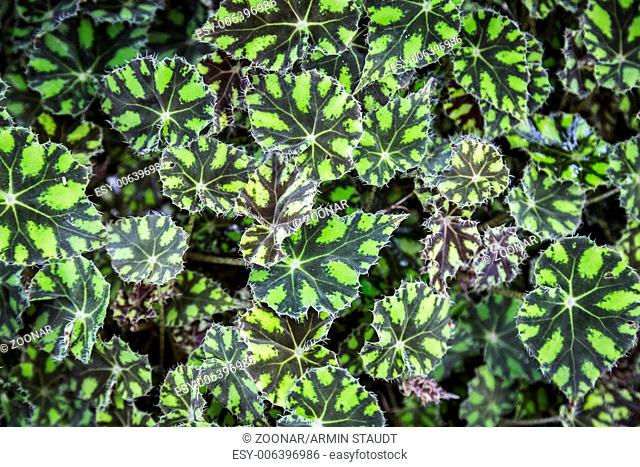green tropical leafs pattern for backgrounds