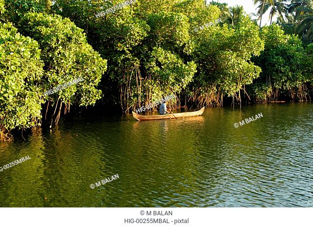 KUMBALANGI MODEL TOURISM VILLAGE NEAR KOCHI WITH BACKWATERS AND FISHING AND MANGROVE FORESTS