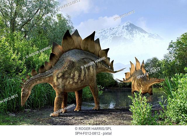 Stegosaur dinosaurs, illustration