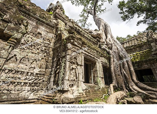 Giant roots tree covering ruins of Ta Prohm in Angkor compound (Siem Reap Province, Cambodia)