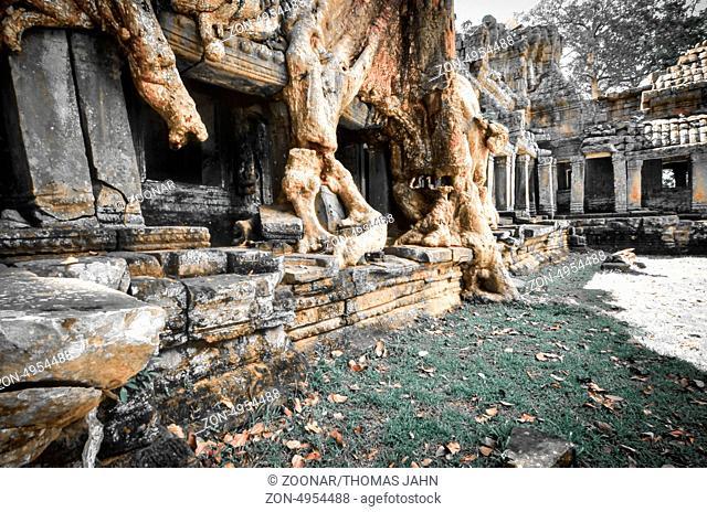 amazing trees, Cambodia, Siem Reap, Angkor Wat