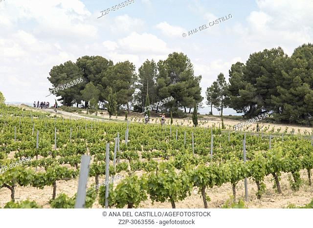 Vineyards in spring. Fontanars dels Alforins, Valencia Province, Valencian Community. Spain