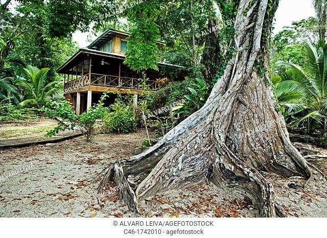 Carenero island, Bocas del Toro province, Caribbean sea, Panama