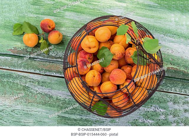 Top view Wof an iron vintage basket with apricots on a old wooden background