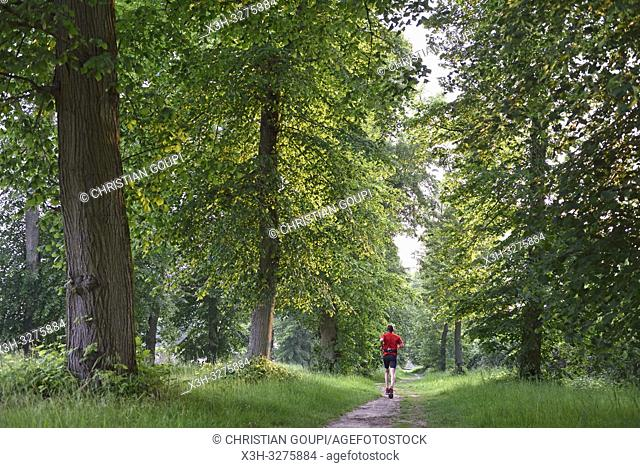 jogger on a path in the Park of the Chateau of Rambouillet, Forest of Rambouillet, Haute Vallee de Chevreuse Regional Natural Park, Yvelines department