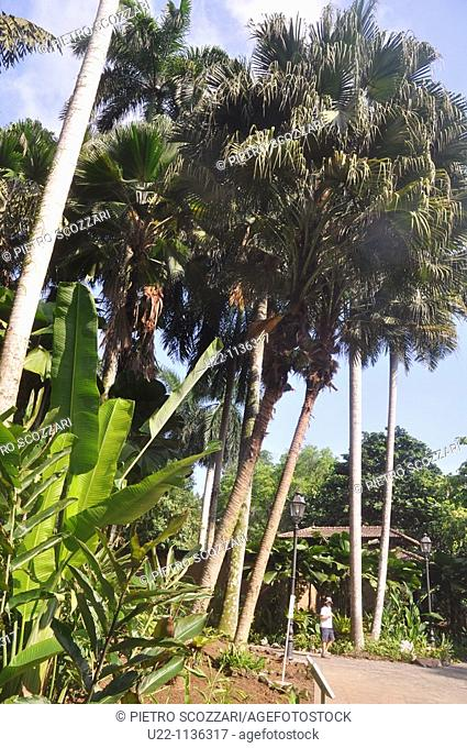 Singapore: the Botanic Gardens