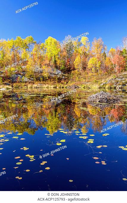 Autumn reflections in a beaver pond, Greater Sudbury, Ontario, Canada