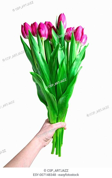 Hand with bouquet from pink tulips isolated on white