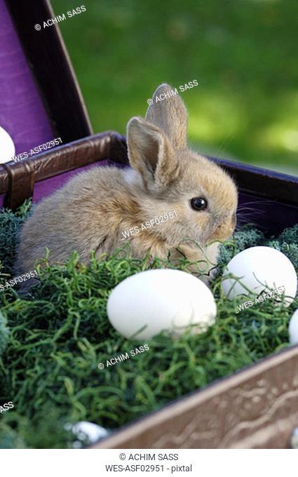 Rabbit sitting in nest