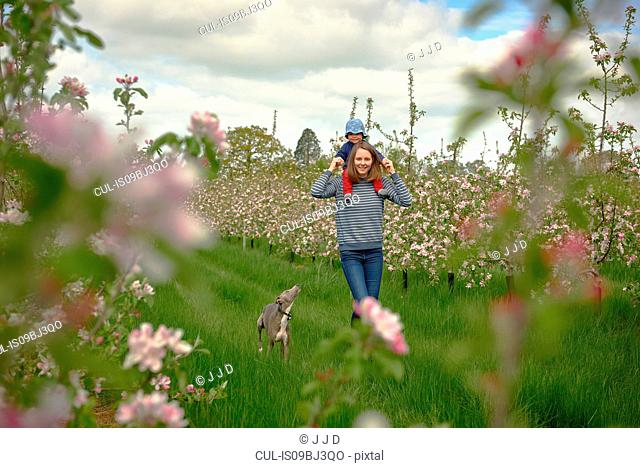 Female toddler getting shoulder carry from her mother in blossoming orchard, portrait