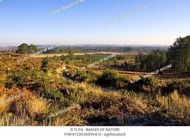 View from ancient hillfort across heathland and woodland habitat, Woolsbridge Hillfort, Dorset, England, January