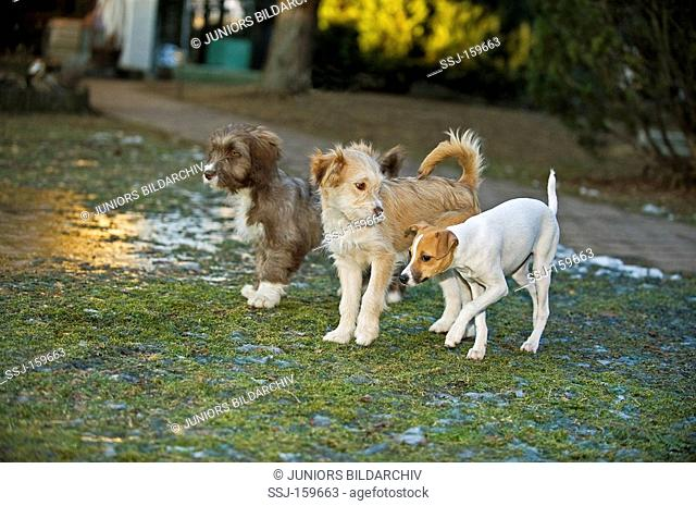 three half breed dogs on meadow