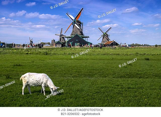 Nedherlands, windmills at Zaan
