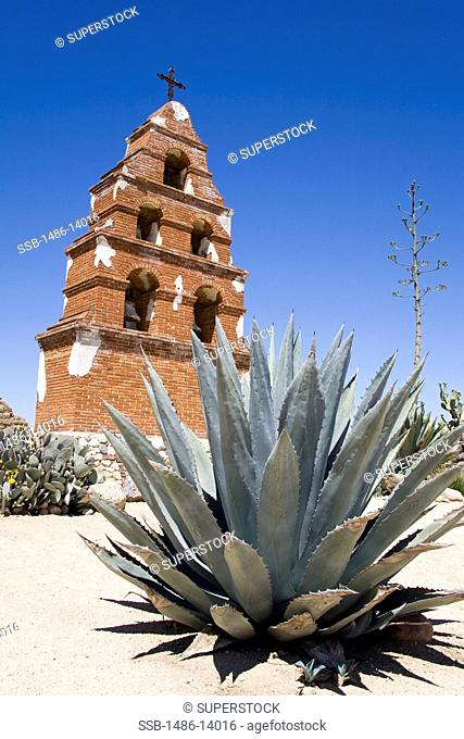 USA, California, San Luis Obispo County, Paso Robles, Bell tower at Mission San Miguel Archangel with succulent in foreground