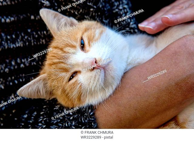 Woman Holding Orange Cat in her Arms