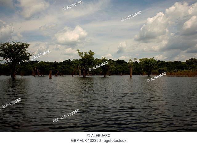 Landscape, Igapós, Cuieiras River, Manaus, Amazônia, Amazonas, Brazil