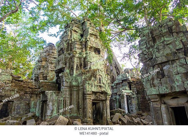 Ta Prohm temple ruins, Angkor, UNESCO World Heritage Site, Siem Reap Province, Cambodia