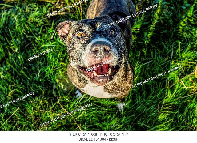 High angle view of dog standing in grass