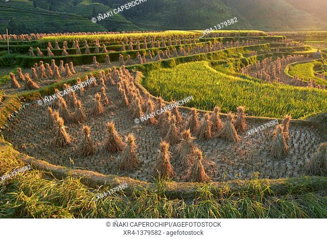 Terraces and rice paddies, Around Rongjiang, Rongjiang, Guizhou, China