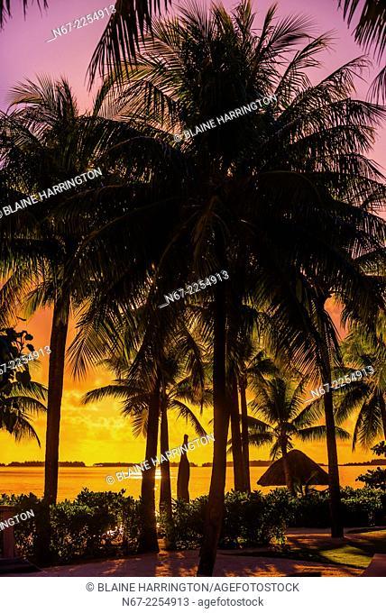 Palm trees, Four Seasons Resort Bora Bora, Motu Tehotu, Bora Bora, French Polynesia