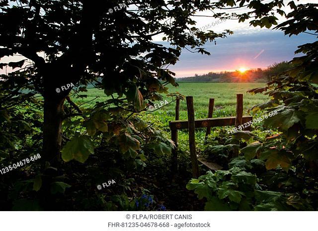 Stile leading from woodland to arable farmland at sunrise, Kent, England, April