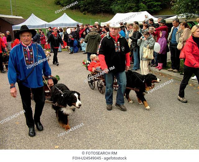 Switzerland, Europe, Vaud, St. Cergues, La Desalpe, festival, Bernese Sheepdogs