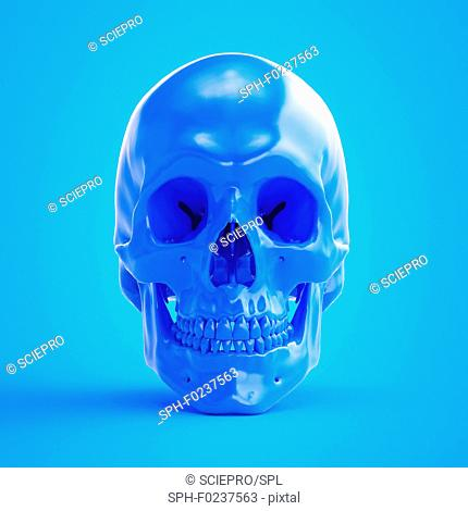 Illustration of a blue skull
