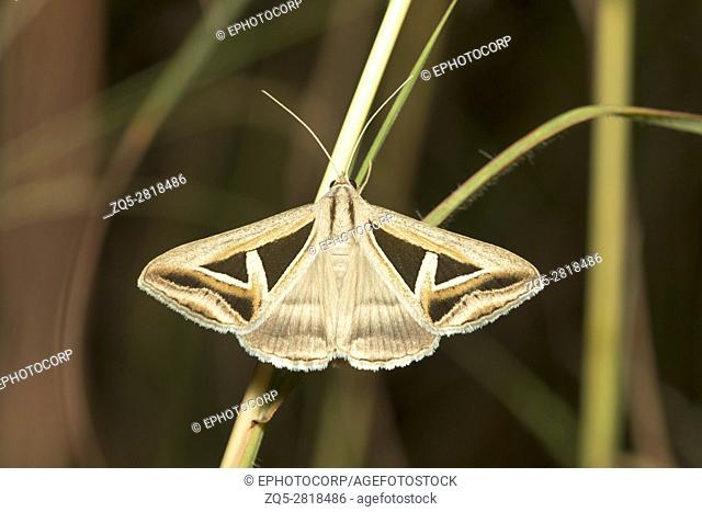 Moth, Bangalore, Karnataka