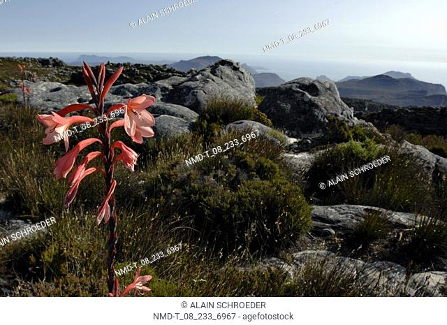 Rocks on a landscape, Table Mountain, Cape Town, Western Cape Province, South Africa