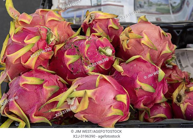 Captain Cook, Hawaii - Dragon fruit (pitahaya) on sale at the Pure Kona Green Market