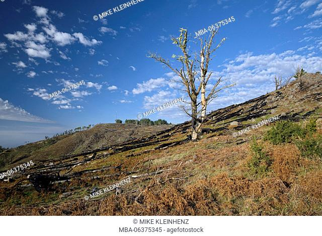 Portugal, Madeira, Poiso, trees, burnt, forest fire