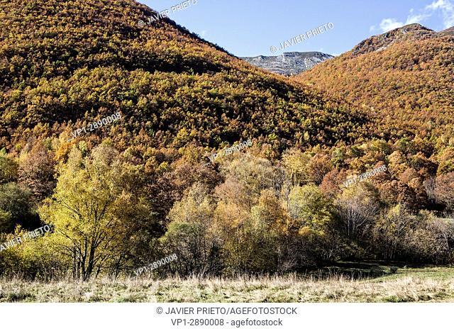 Mountainous landscape on the ascent to the port of Ancares. Autumn forest. The Ancares. León province. Castilla y León. Spain