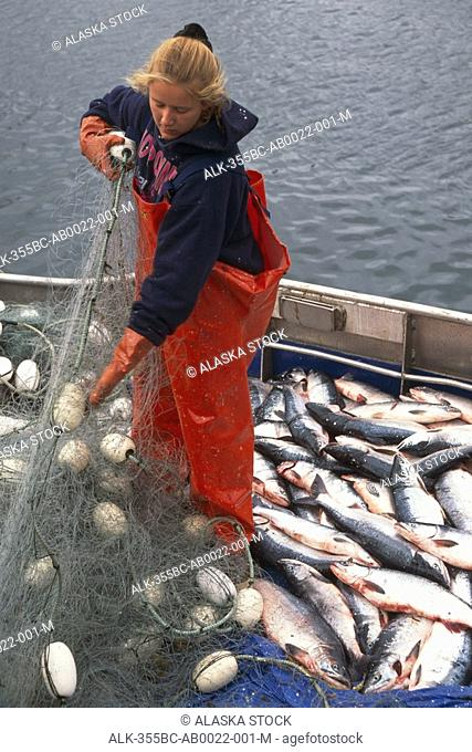 Woman Picks Red Salmon Out of Net Commercial Fishing AK SW Summer