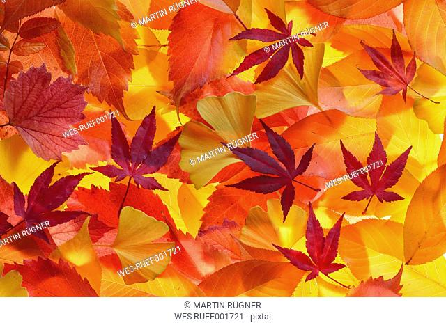 Autumn leaves of different trees