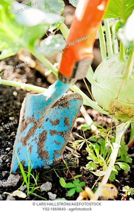 Closeup of gardening tool, small spade in the dirt