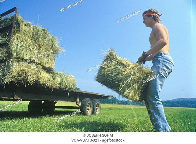 A man bailing hay on a cattle farm in Bourbon, MO