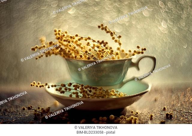Dried flowers in teacup