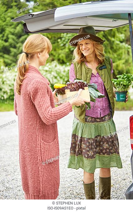 Women loading freshly picked vegetables in to car