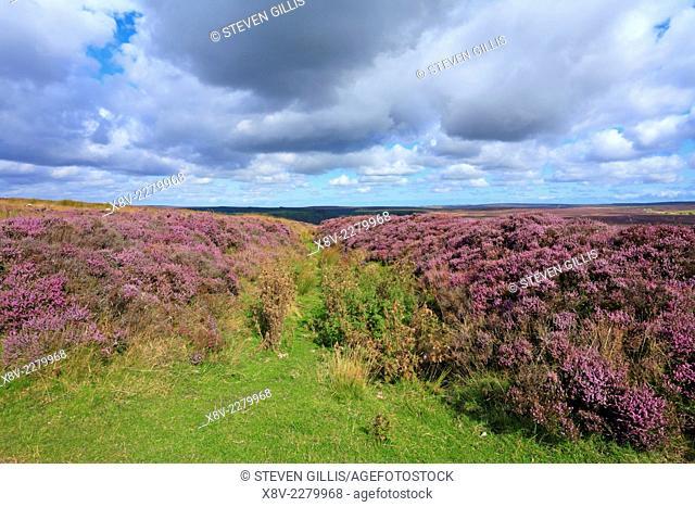 Gallows Dike on Levisham Moor, North Yorkshire, North York Moors National Park, England, UK