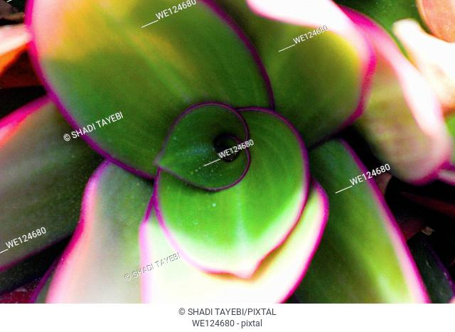 Inside of a flower