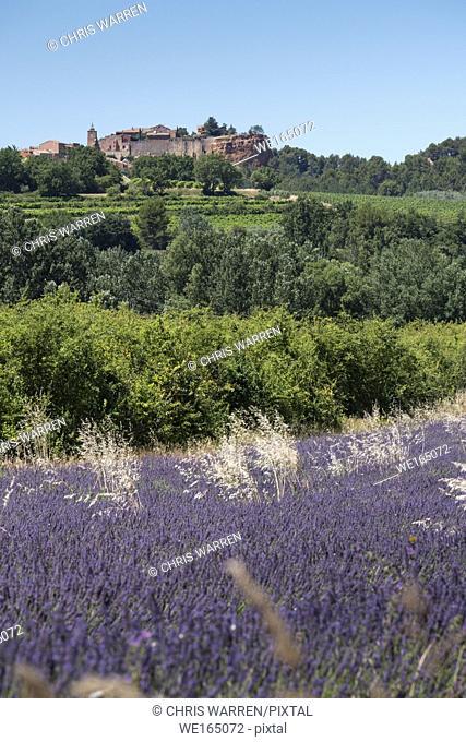 Lavender Fields Roussillon Apt Vaucluse Provence-Alpes-Côte d'Azur France