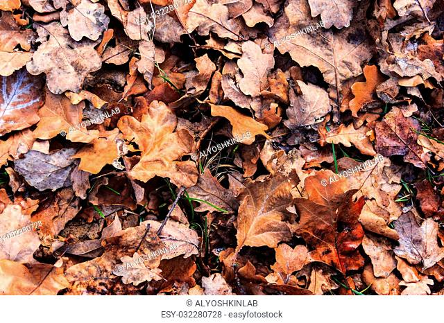 Background of fallen leaves, lying just beneath my feet