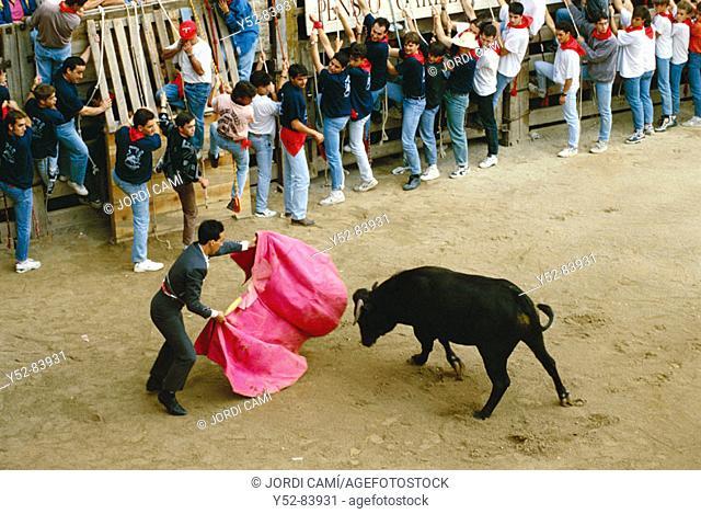 Bullfighting, Correbou de Cardona. Cardona, Bages, Barcelona province, Spain