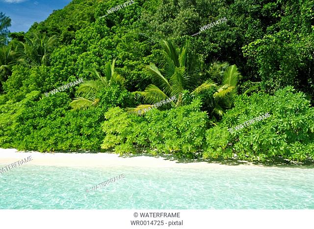 Tropical Beach, Pacific, Micronesia, Palau