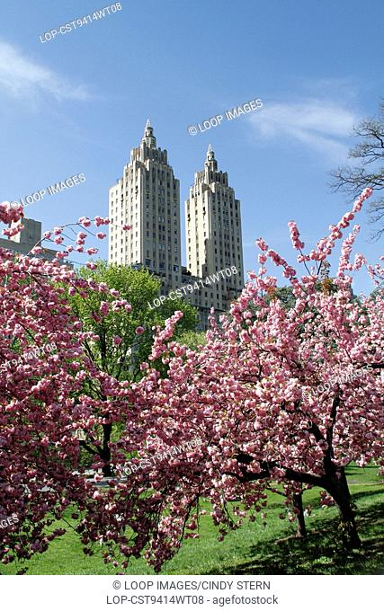 El Dorado through cherry blossoms in Central Park