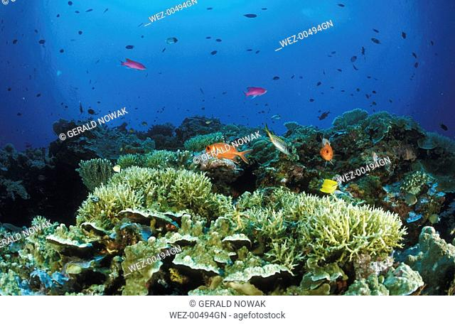 Fishes swimming over reef