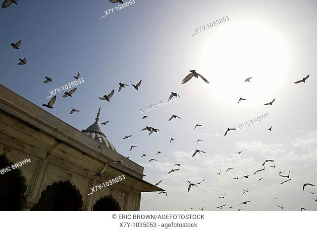 A group of birds flies away  Taken at the Red Fort, New Delhi, India