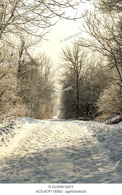 Part of the Trans-Canada Trail in winter with sun filtering through trees, nr Elora, Ontario, Canada