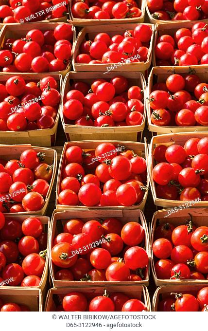 Canada, Quebec, Montreal, Little Italy, Marche Jean Talon market, autumn, tomatoes